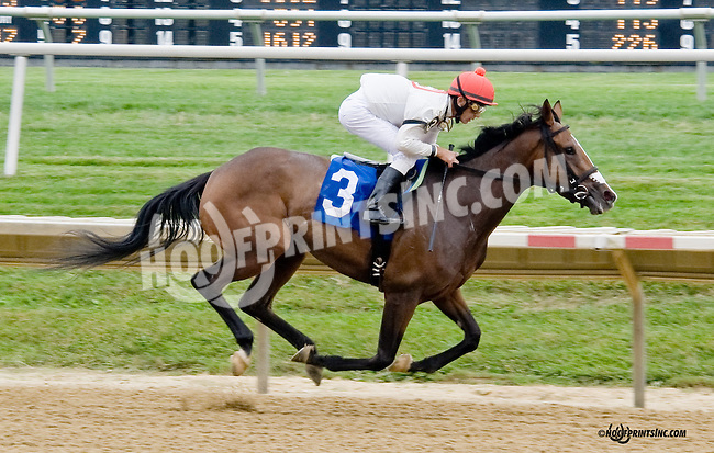 Lily's Peak winning at Delaware Park on 8/30/14