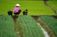 Asie/Vietnam/env d' Haiphong /Thuy Nguyen: Paysanne puisant de l'eau dans une rizière