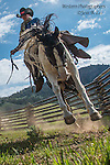 A photo of a cowboy bucking out a horse. Cowboy Photos, riding,roping,horseback