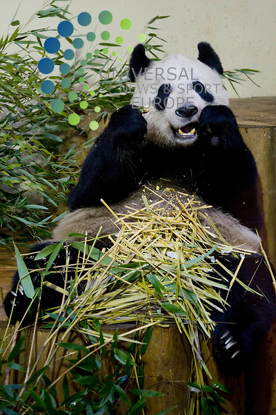 Edinburgh Zoo has said it believes its panda Tian Tian is pregnant and may give birth at the end of the month.<br />