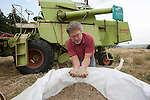 John Letts, Heritage grains<br /> <br /> Unloading grain.<br /> Though John gets a slightly lower yield per acre than high input organic systems he has a very stable yield and good grain quality for baking.
