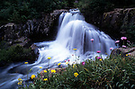 Waterfall, Wildflowers, San Juan National Forest, Colorado
