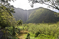 A waterfall in Waipio Valley on the Big Island of Hawaii