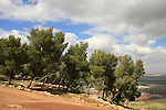 Israel, Pine trees on Mount Gilboa