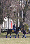 A thoroughbred makes it way to the training track at Overbrook Farm in Colts Neck, New Jersey.