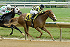 Domestic Colours winning at Delaware Park on 5/26/12