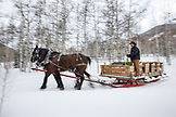 USA, Colorado, Aspen, wrangler MIke Lewindowski drives horses and a sleigh through the snow, Pine Creek Cookhouse, Ashcroft