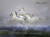 Bob, ANIMALS, horses, photos, GBLAEC1109,#A# Pferde, caballos