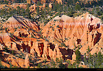 Fairyland Canyon Landscape at Sunset, Hoodoos and Douglas Fir, Bryce Canyon National Park, Utah