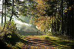 A small track in the woods leading to a gate under a canopy of trees in autumn sunlight in England
