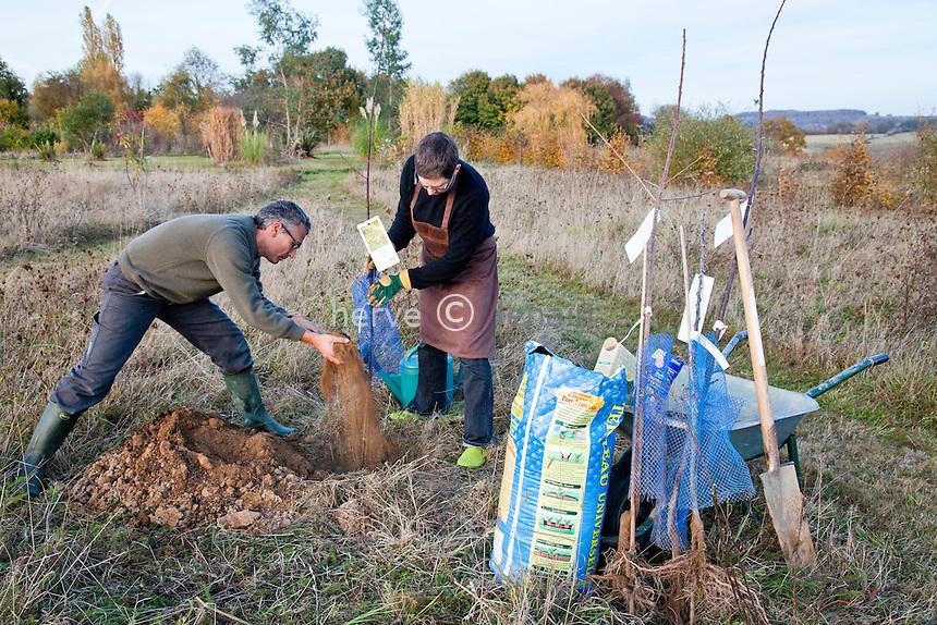 plantation d'arbres fruitiers en automne..Model & property release OK. // planting fruit trees in autumn. Model & property release OK