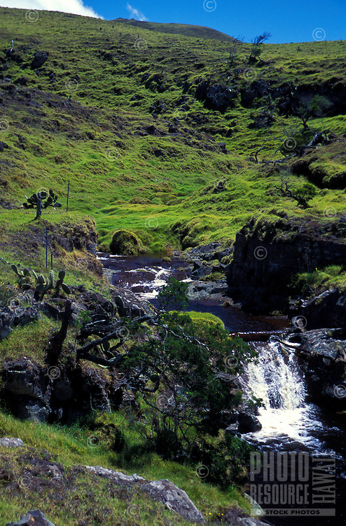 Stream running through the meadow land of North Kohala, Big Island