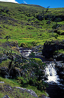 Stream running through the meadow land of North Kohala, Big Island