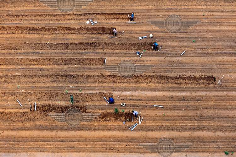 People work on agricultural land at a farm in the area of Wuming. /Felix Features