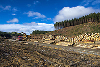 Forest Enterprises in Wairarapa, New Zealand on Tuesday, 16 July 2019. Photo: Dave Lintott / lintottphoto.co.nz