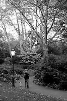 Dog walder on a walkway with lamp post in New York's Central Park.