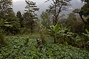 India - Sikkim - Tenzing Lepcha, a 39-year-old farmer and environmental activist working in his field where he grows a wide variety of vegetables and fruits.