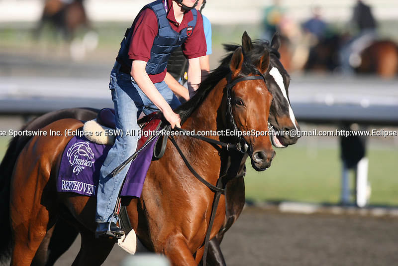 04 November 2009: Beethoven on track in preparation for the Breeders' Cup at Santa Anita Park