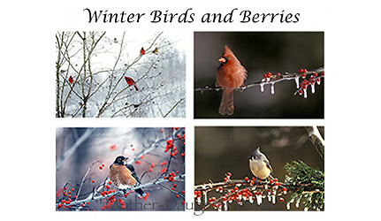 Winter bird and berries card set