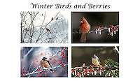Winter bird and berries card set