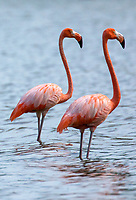 Pink Flamingos<br />