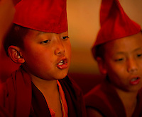 Young Student Buddhist  Monk chanting in a monastery in Sikkim India