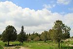 Israel, Shoham forest park in Western Samaria