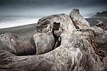 USA, Washington, Olympic National Park, Rialto Beach, driftwood
