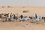Tuareg watering hole, Sahara Desert, Mali