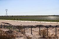 Vineyard field between Caborca and<br /> Puerto Peñasco, Sonora, October 20, 2017.-