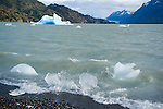 Icebergs Washing to Shore in Choppy Lago Grey in Torres del Paine National Park in Patagonia Chile