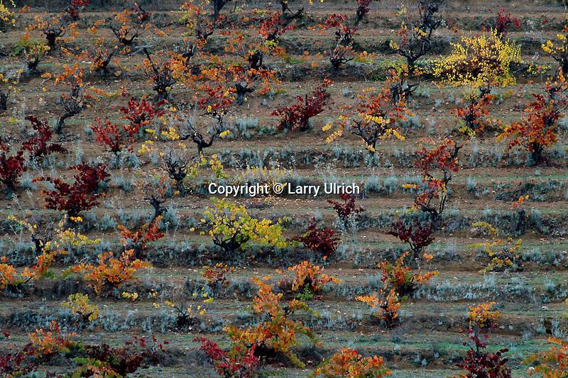 Vineyards<br /> Napa Valley<br /> Napa County<br /> California
