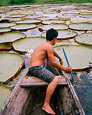 PERU, Amazon Rainforest, South America, Latin America, shirtless man on canoe in giant lily pads pond