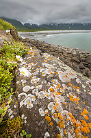 Landscape along the Alaska Peninsula coast, Katmai National Park, southwest, Alaska. Orange lichen on the foreground rocks, Aleutian mountain range covered in clouds.