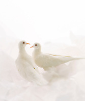 Two doves.<br />