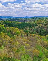Early spring tree foliage, Daniel Boone National Forest, Cumberland Falls State Resort Park, Corbin, Kentukcy