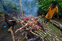 """Butchering and Barbeque of a wild boar, Sus scrofa, by Papuan hunters from Lobo village, Triton Bay, mainland New Guinea, Western Papua, Indonesian controlled New Guinea, on the Science et Images """"Expedition Papua, in the footsteps of Wallace"""", by Iris Foundation"""