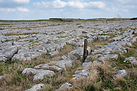 Limestone pavement, Malham, North Yorkshire.