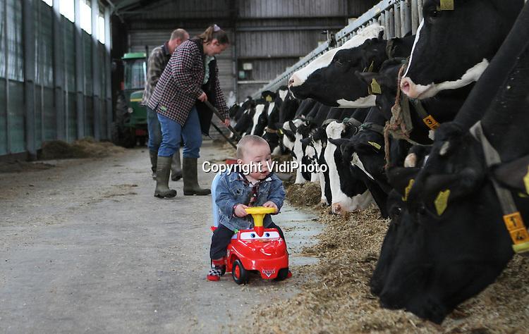 Foto: VidiPhoto..MEEUWEN - Het is misschien wel de jongste boer van Nederland, de zeven maanden oude Nico Blokland uit het Brabantse Meeuwen. De peuter is niet bij de koeien van vader Kees en moeder Jannie weg te slaan. Nico is bijna altijd bij de dieren te vinden. Het is ook de enige manier om het jochie rustig te krijgen. Twee maal per dag gaat Nico mee om de 75 koeien te melken. Het boerenbedrijf van de familie Blokland-Werkman bestaat naast de melkkoeien, uit nog wat jongvee...Tel. Jannie: 0416-352448.