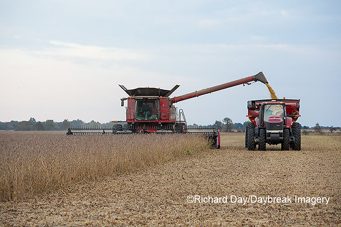 63801-07213 Soybean harvest with Case IH combine in Marion Co. IL