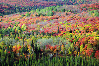 Autumn trees in Sawtooth Mountains, viewed from Oberg Mountain, Superior National Forest, Minnesota
