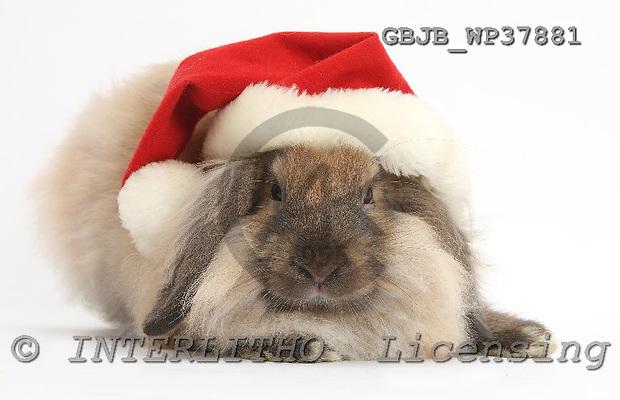 Kim, CHRISTMAS ANIMALS, photos, GBJBWP37881,#XA# stickers