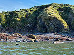 Fur Seals & Elephant Seals, Elsehul Bay