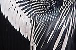 USA, Florida, Everglades NP, Anhinga Feather Detail
