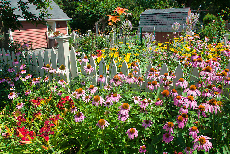 Perennial Flower Garden In Sunny Summer Backyard Plant