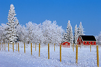 red barns in winter with hoarfrost<br />