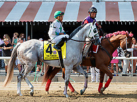 Heartwood in the post parade as Whitmore (no. 3) wins the Forego Stakes (Grade 1), Aug. 25, 2018 at the Saratoga Race Course, Saratoga Springs, NY.  Ridden by  Ricardo Santana, Jr., and trained by Ron Moquett, Whitmore finished 1 1/2 lengths in front of City of Light (No. 8).  (Bruce Dudek/Eclipse Sportswire)