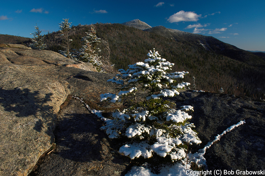 Snow covered balsam fir on the summit of Hopkins Mt with Giant Mt in the background in the Adirondack Mountains of New York