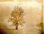 lone tree in winter with added texture and tone