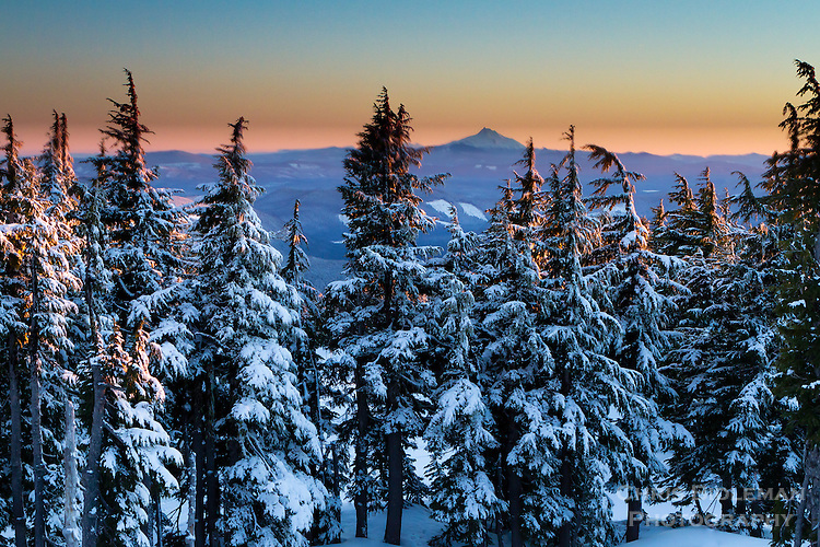 View from top of Mt Hood looking south towards Mt Jefferson with snow covered evergreens in foreground at sunset with last rays of sun shining on tree tops in the Oregon Cascades mountain range